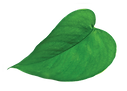 NP_heart_green_leaf-web.png