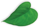 NP_heart_green_leaf.png