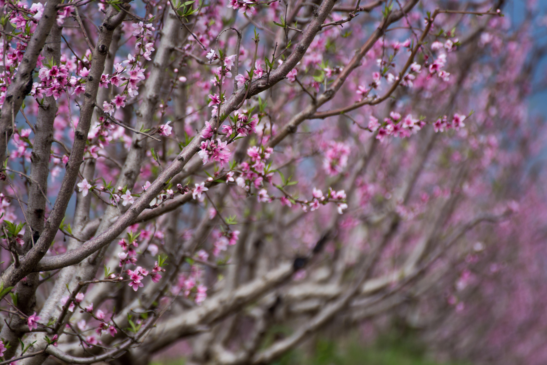 אביב הגיע