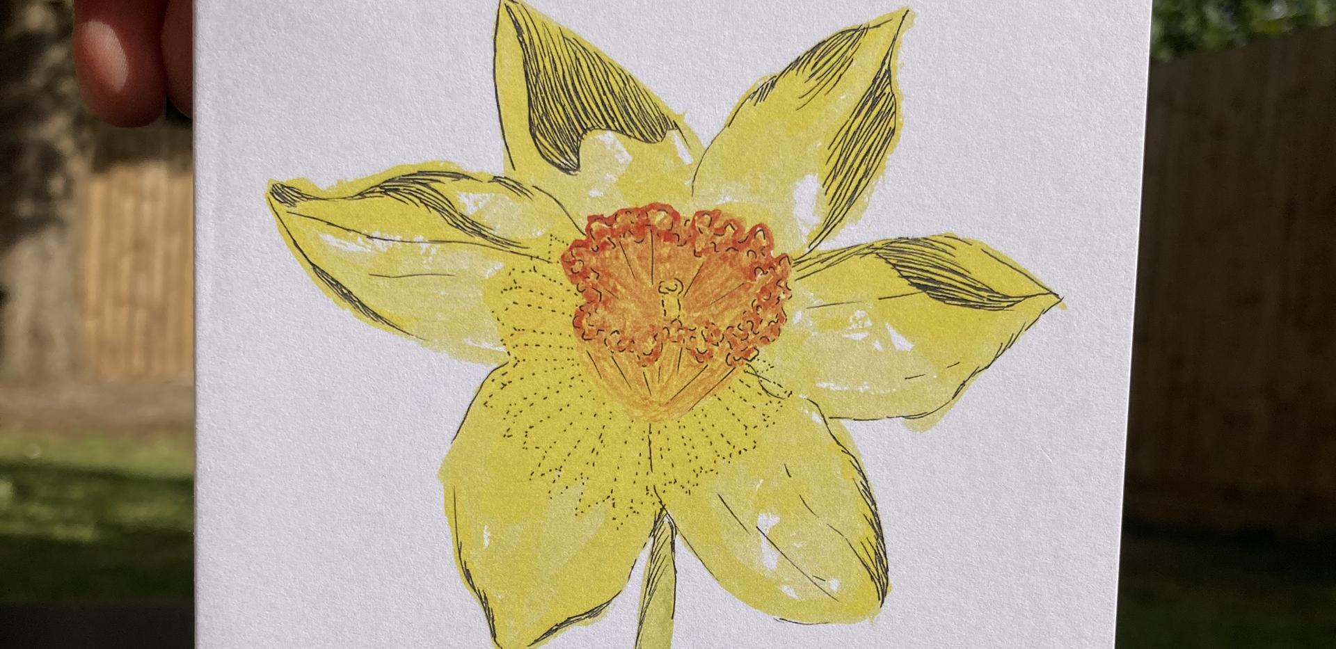 Narcisa Primaveral