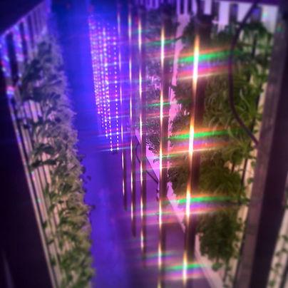 upgrown green spectra.jpg