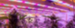 04 aurora test mellom test.jpg