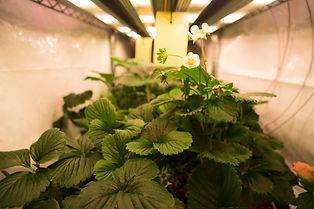 High Flower 164A6051.jpg