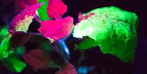2015 PlantForm ICON.jpg
