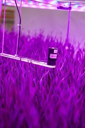 Space-Age-Barley-11.jpg