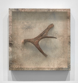 Remnant (Moose Antler III)