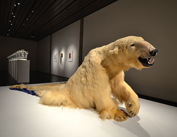 Polar bear taxidermy that is half animal (including the front half of the body) and half rug