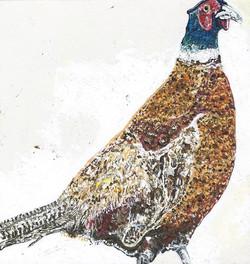 Philip the Pheasant 2015