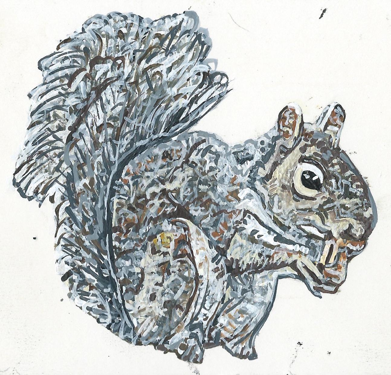 Samuel Squirrel 2016