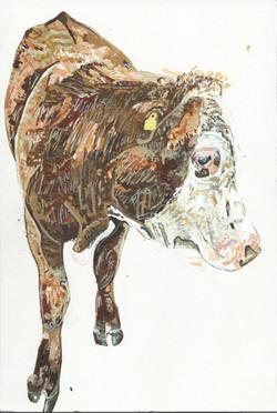 Chloe the Cow 2016