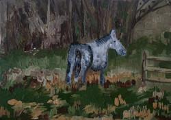 Mr Horse 2013