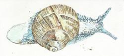 Sam the Snail 2016