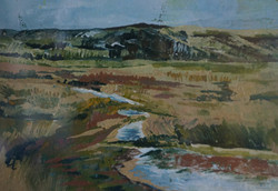 The Coastal Marshland 2013
