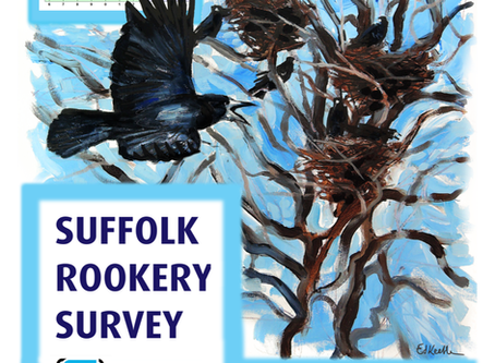 Suffolk Rookery Survey 2020