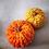 Thumbnail: Pumpkins