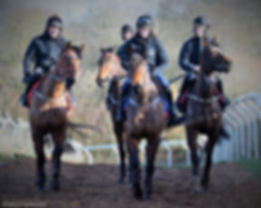 Morning On The Gallops 1.JPG