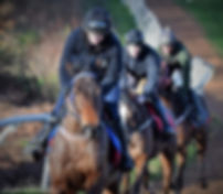 Morning On The Gallops 3.JPG