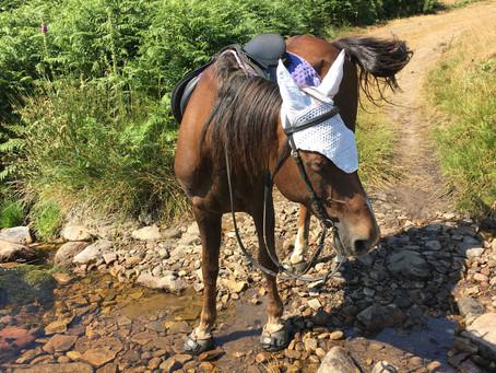 Cavallo hoof boots!