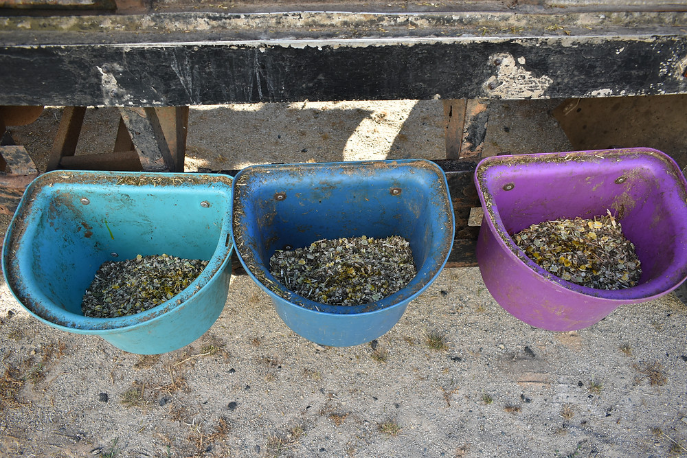 These are the feed bowls for The Great Adventure, we were on the go for 6 weeks and didn't have the means to wash them, please excuse the state of them!
