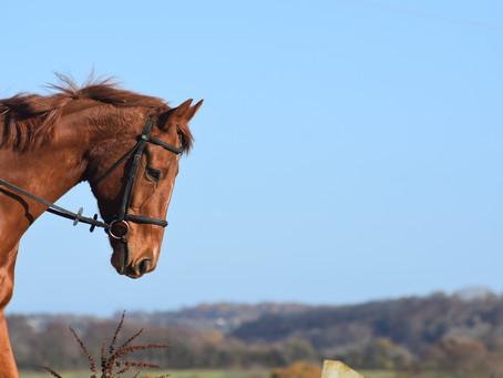 Time To Shine ~ Horse Health