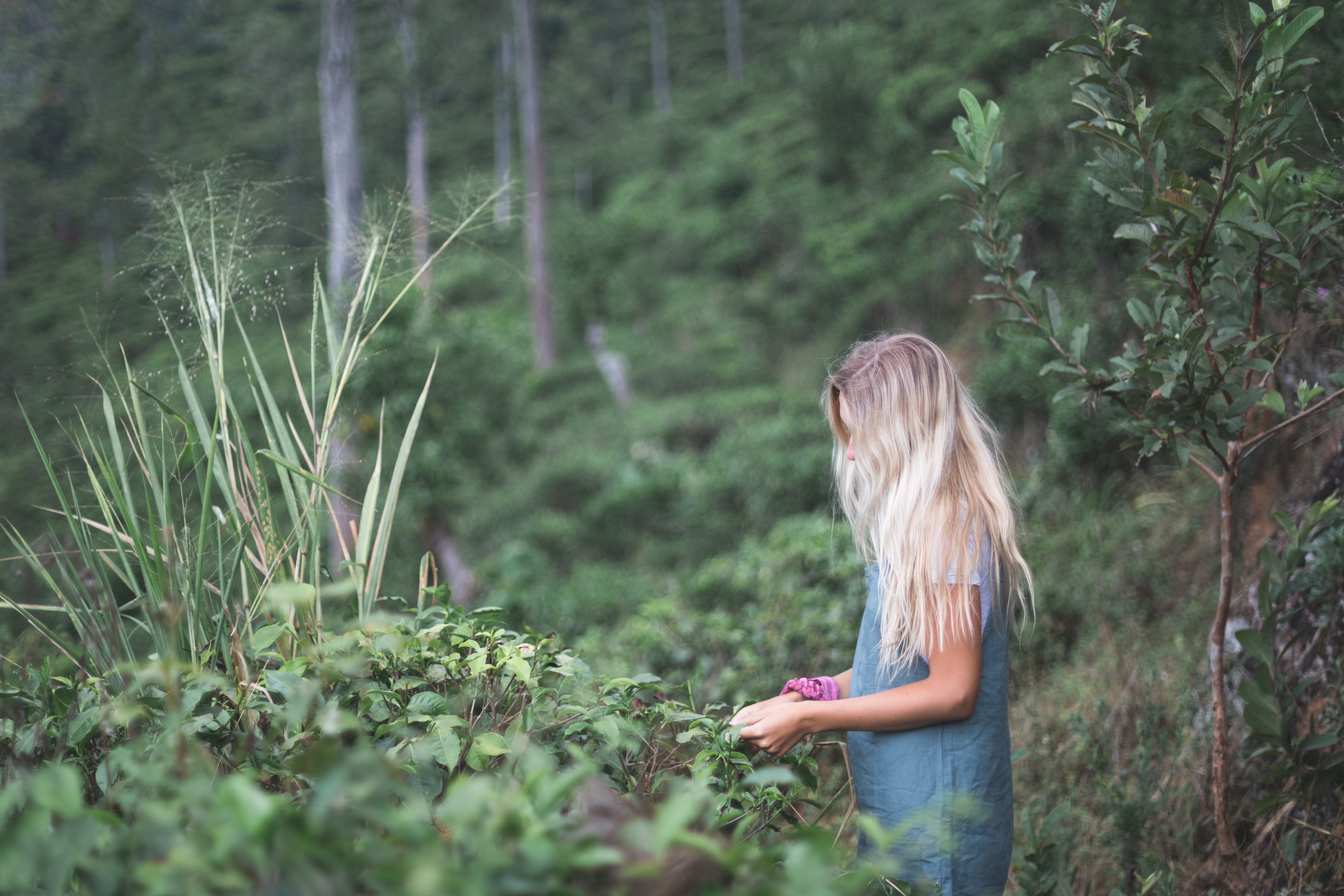 Jenni Lisacek Conservation