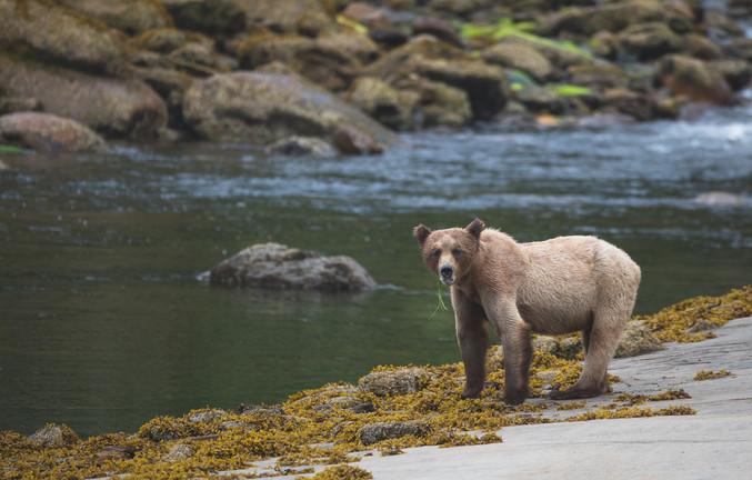 Chase Teron Wildlife Photographer Grizzly Bear