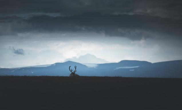 Svalbard wildlife photo tour