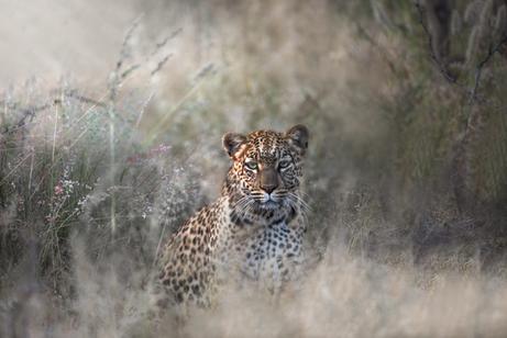 Chase Teron Wildlife Photographer Artica Studios Photo Tours
