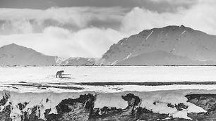 Natural World Safari Svalbard Expedition