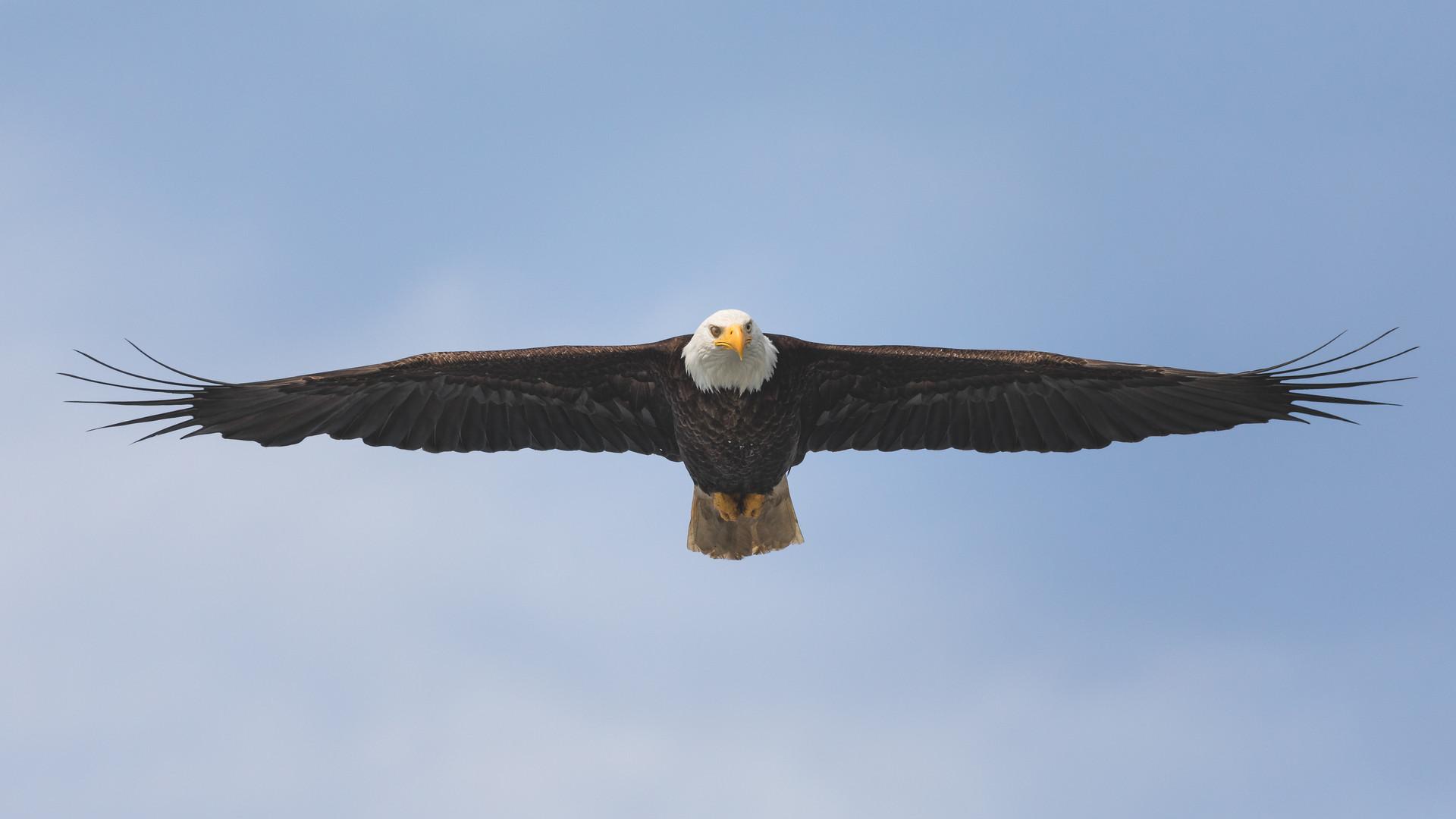 Wild eagle photography by Jenni Lisacek