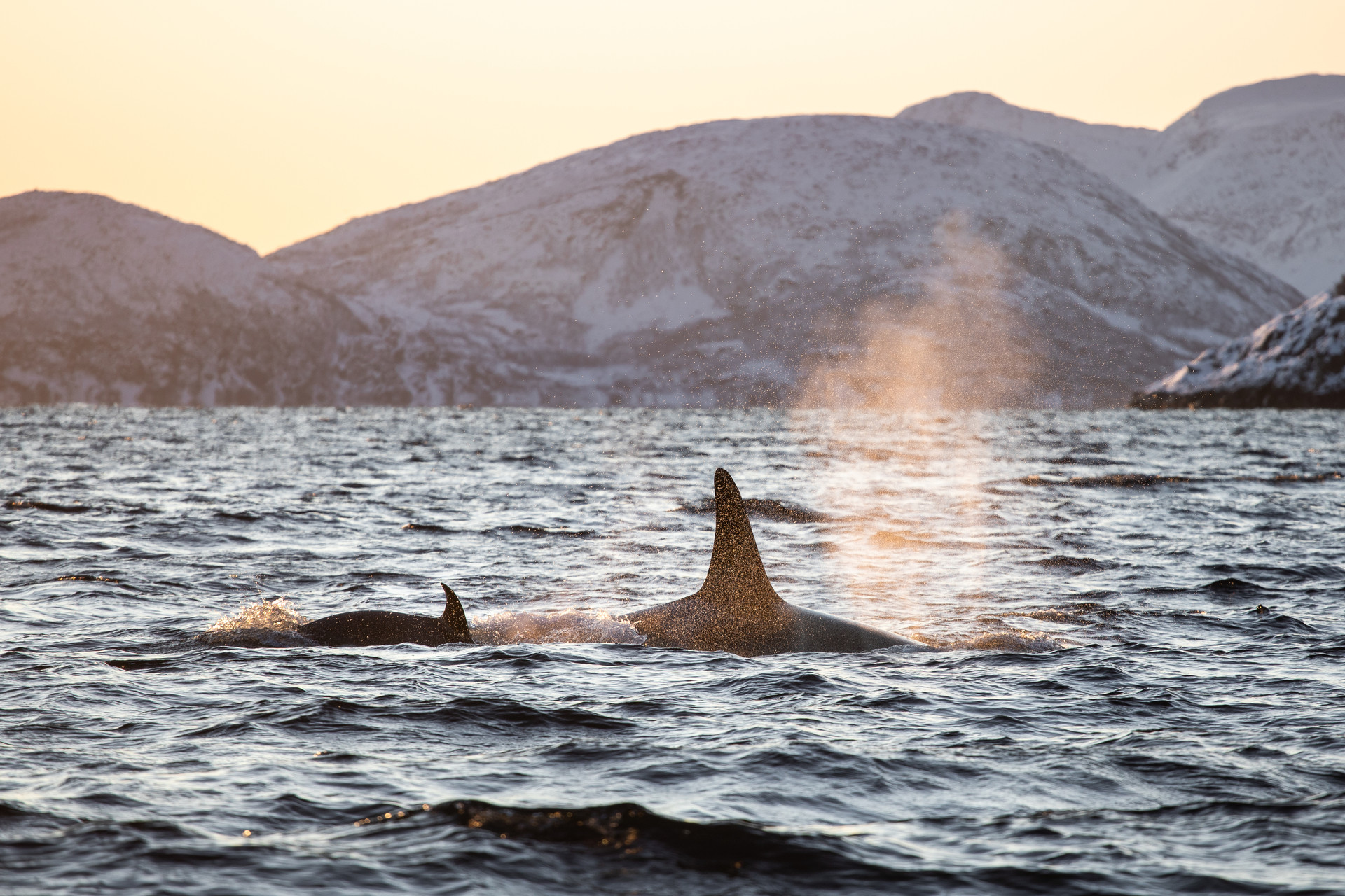 Jenni Lisacek Whale Photography Norway