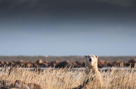 Churchill Wild Polar Seal River Lodge by Chase Teron