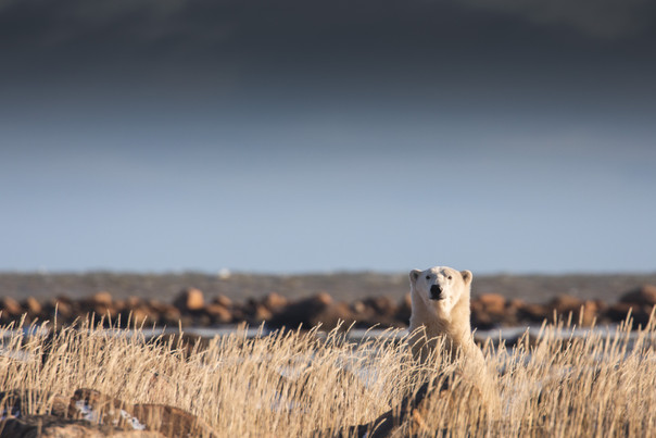 Churchill Wild Polar Seal River Lodge by Chase Teron