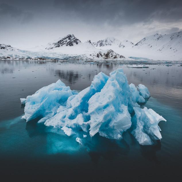 Polar Bear Tour in Svalbard 2020 Artica Studios
