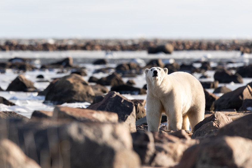 Tundra Wildlife Jenni Lisacek-16.jpg