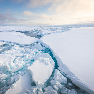 Pack ice melting in Svalbard by Chase Teron