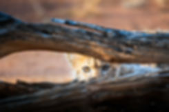 Chase Teron Wildlife Photographer Cheetah Cub