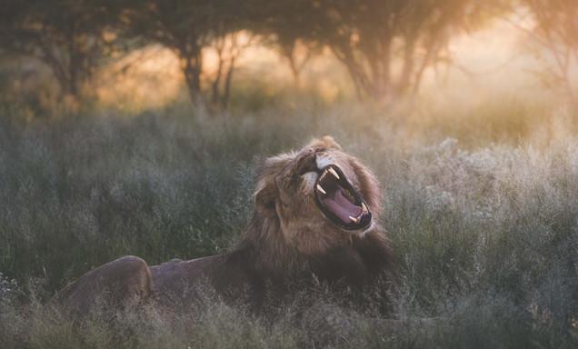 Luxury Photography Safari in Namibia November 31 to December 1 2021