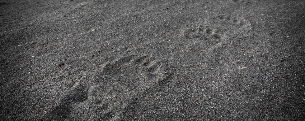 Polar Bear footprints in Svalbard by Chase Teron