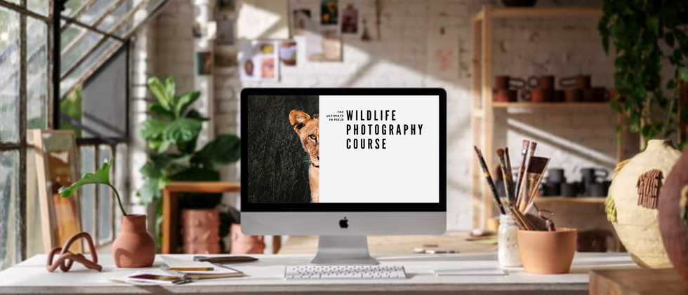 Ultimate Photo Course for Wildlife Photography