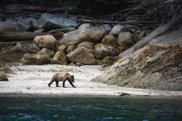 Chaes Teron Wildlife Photography Grizzly Bear