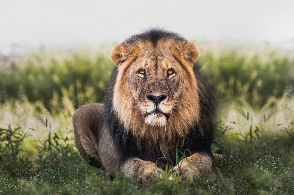 Chase Teron Photographer Namibia Safari