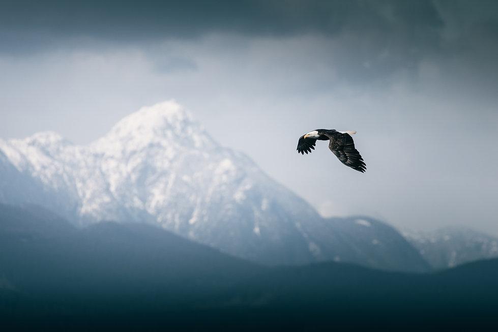 Chase Teron Great Bear Rainforest Photo