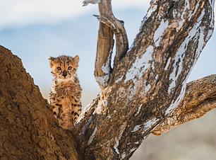 Artica Studios African Wildlife Tour