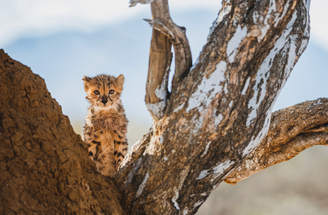 Chase Teron Wildlife Photographer Artica Studios Photo Tours