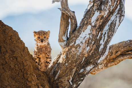 Chase Teron Wildlife and Nature Photographer