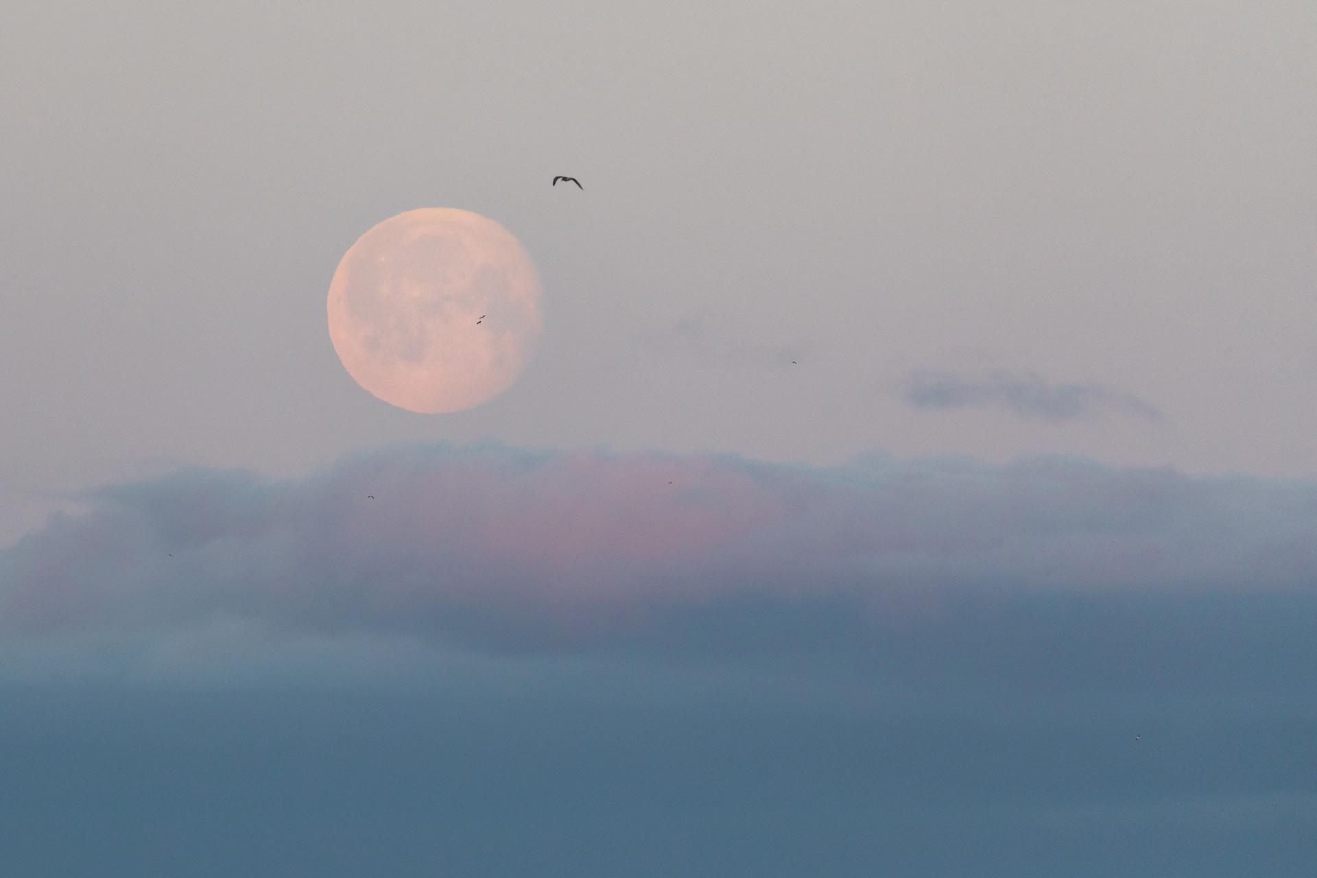 Moon Rising Jenni Lisacek