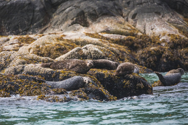 Great Bear Rainforest Wildlife Chase Teron Photographer