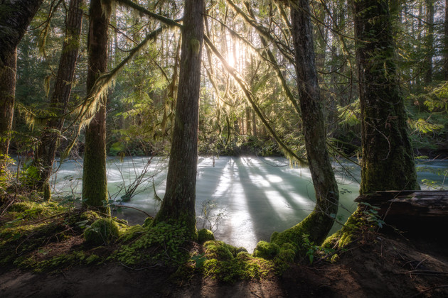 Vancouver Island Rainforest by Chase Ter