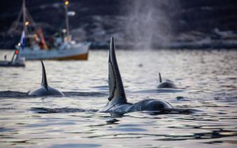 Story Orca-50.jpg